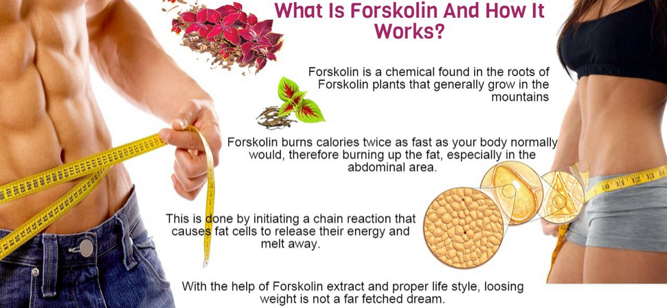 what is forskolin